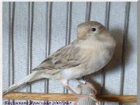 Fostering A New Generation In Aviculture