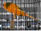 Mentoring Young Bird Breeders