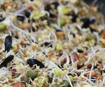 Sprouting Seeds For Birds