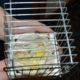 Injured-Bird-Who-Do-I-Call crestedcanary.com