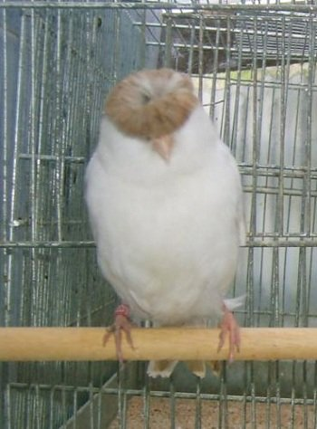 Keeping-A-Pet-Bird