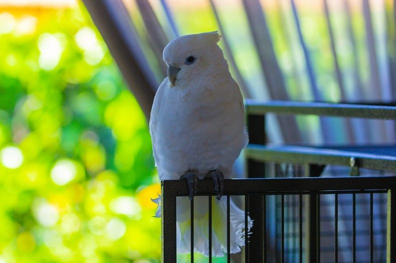 Best Budget Cage For Canaries-3