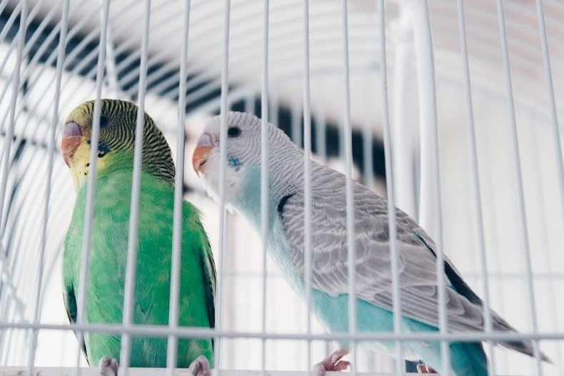 Best Budget Cage For Canaries